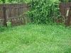 crazy grass