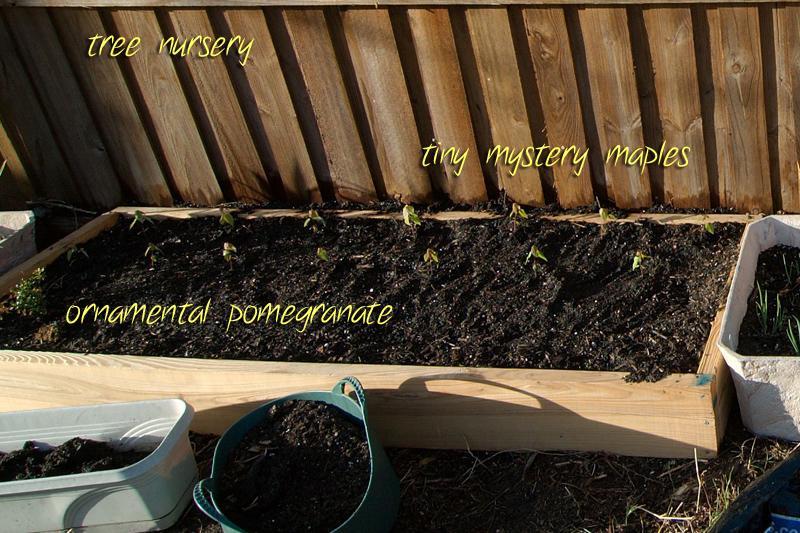 new planting box