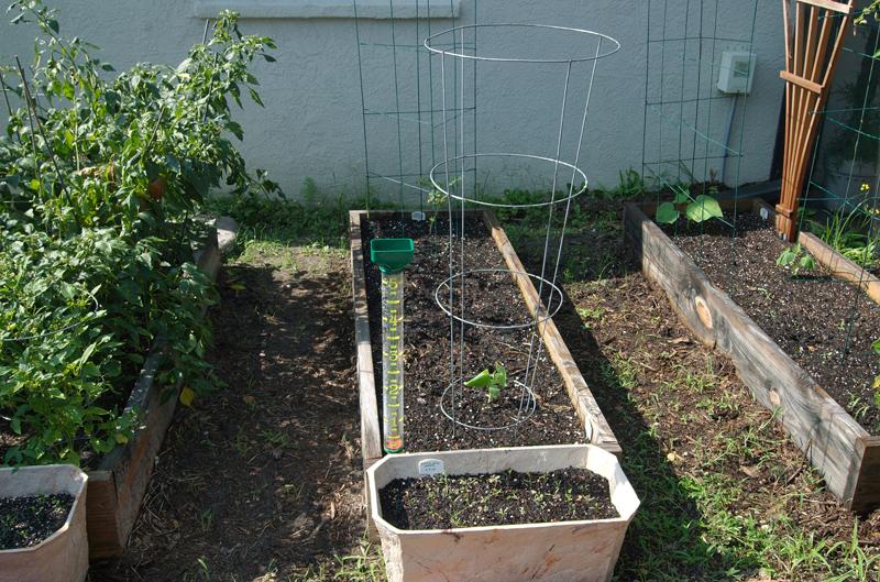 planting box