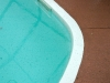 gnats in pool