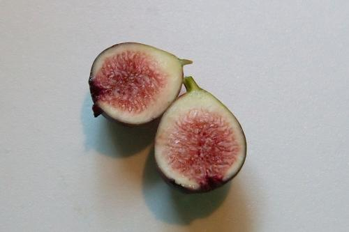 First Fig of 2008